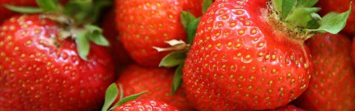 erdbeeren_01